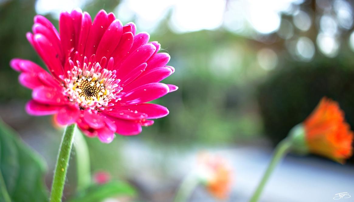 Flowers of Your Faithfulness